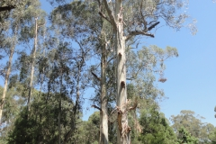 Tree Felling, Ascending large tree