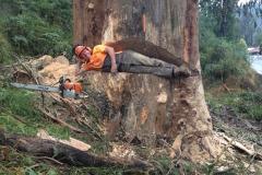 Tree Lopping, Man in cut tree 2