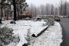 Tree Services, Snow