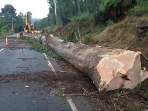 buxton tree works 005