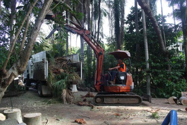 Stump Grinding Services Sunshine Coast